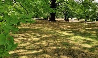 新宿御苑の新緑