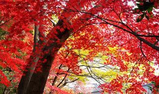 新宿御苑の紅葉2015
