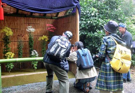 新宿御苑「菊花壇展」写真教室