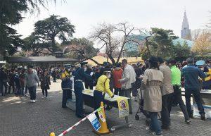 新宿御苑の桜2017